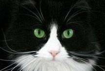 I L♥ve Cats >^..^< / by Iris van White