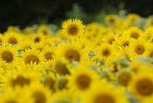 Flowers`•.¸¸.ஐ / by Iris van White