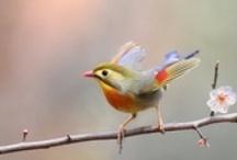 Outstanding Birds / by Sharon Angemeer-Despines