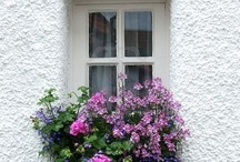 window boxes and containers / by Meg Colquhoun