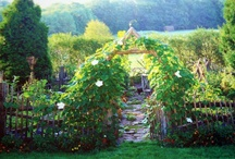 garden design ideas  / by Meg Colquhoun
