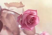 Flowers / by Melinda Baird