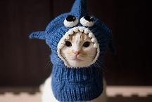 Cat Stuff / by Kitty Mama