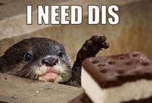 I need dis... / by Jessie
