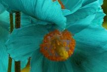 Turquoise / by Patricia Cook