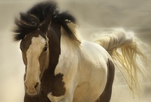 Hoofbeats / All that is horses, equipment, breeds, funny stuff and more  / by Caroline Marin