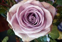 Lavender Bride / {Blueberry Wedding Colour Palette} / by Atelier Rousseau Bridal