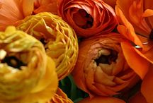 Autumnal Bride / {Autumnal Wedding Inspiration} / by Atelier Rousseau Bridal