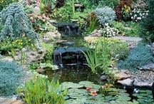 Gardens and Water Features / by Diane Howe