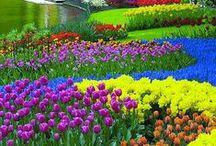 FLOWER GARDENS  / Beautiful Gardens and Planets  found in flower gardens. / by Karen Taylor