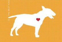 Adora-bull! / Dedicated to all things Bull Terrier!  / by Bethany Eubanks