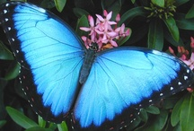 Animal Ally: Butterfly / Butterflies, magickal moths, animal ally, creatures of the element of air.... / by Ellen Dugan