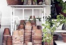 Garden: Pothead / by Philip Burke