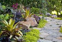 Garden: Bromeliads  / by Philip Burke