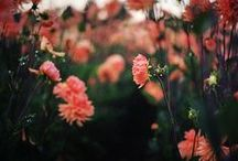 floral / by Natasha Medeiros