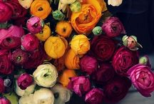 Beautiful flowers / Just looking at these beautiful pictures makes me smile..... / by Candy Meredith