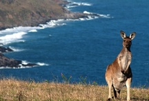 Australia / by Carnival Cruise Lines