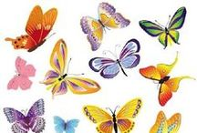butterfly / in France, Charente Maritime and Provence / by Elisabeth