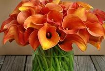 Orange / by Betty Malone