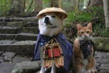 Lovely Cats & Dogs / by Youko Sano