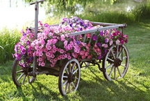 Country Cottage Gardens / by Trish Robinson