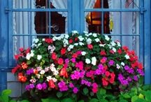 Window Boxes! Balconies / Looking mostly for the 'drama queens'...full of flowers!! / by Trish Robinson
