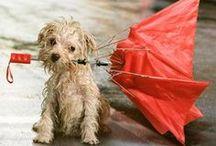 rain / by Anne James