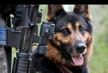 K9 Heros / by Heather Bradley