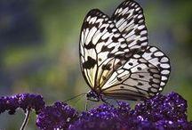 BUTTERFLIES ~ LADYBUGS / by Bev Murphy