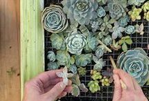 Gardening Inspirations / Ann Arbor loves to garden and has the gardens to prove it! We celebrate this love of gardening with these awesome ideas, places and pieces of outdoor art / by Ann Arbor District Library