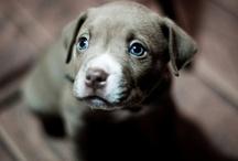 so cute. / by Cassie Pilarski