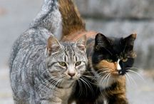 Cats: pet, stray & feral! / Pet, Stray, Feral. They are all one species: Felis catus and they ALL deserve our protection and care!    / by Becky Robinson
