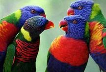 May 24: Lorikeets Return! / Our immersive lorikeet exhibit returns for the summer beginning Saturday, May 24, just in time for Memorial Day. Step into the outdoor aviary, meet the 'keets, and hand-feed them some nectar! The exhibit runs from May 24-Labor Day. / by The Maritime Aquarium at Norwalk
