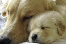 For Emmitt and Otis / Our beloved Golden Retrievers! / by Donna Jenkins