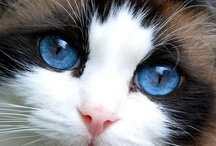 I LOVE CATS / Animals are God's gift to us ♥ / by Lexee Harwood