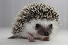 Critters: Hedgepigs / by Sarah J. Smith
