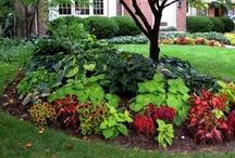 Gardening / by Dina Woodard