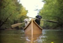 Boats / by Sherri