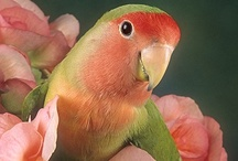 peachy / by Judy Ziebell