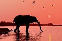 """ Wildlife "" / by Fanta- Xyst-A"