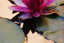 Koi, Water lily, and Lotus / Photographs, mixed media, Chigiri-e, and paintings / by Martha Archambault