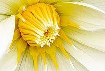 Flora & Landscapes / by Rose Cowperthwaite