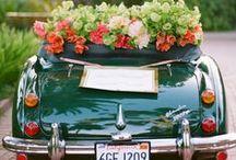 Weddings / by Barcelonette