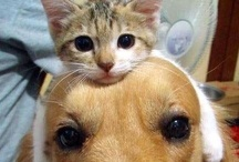 Cats & Dogs / by Tyler Munno