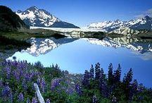 Alaska / by Amber Boicourt