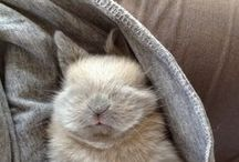 Holiday: Easter Bunny / by Rebekah Kik