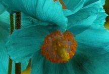 Garden ideas / by Diana Garrett