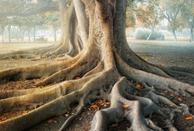 TREE'S / Nature at its Best / by Suzanne Halpenny