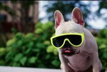 Furry Friends / 'Nuff said.  / by LOOKMATIC