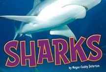 Shark Week / by Capstone